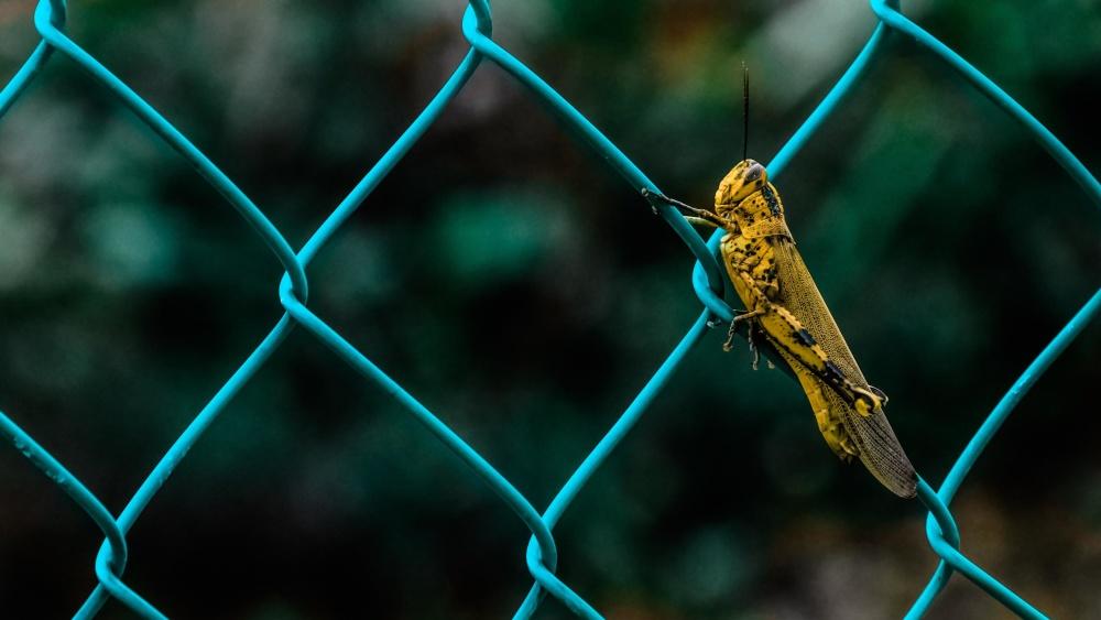 Noise Reducer Fences