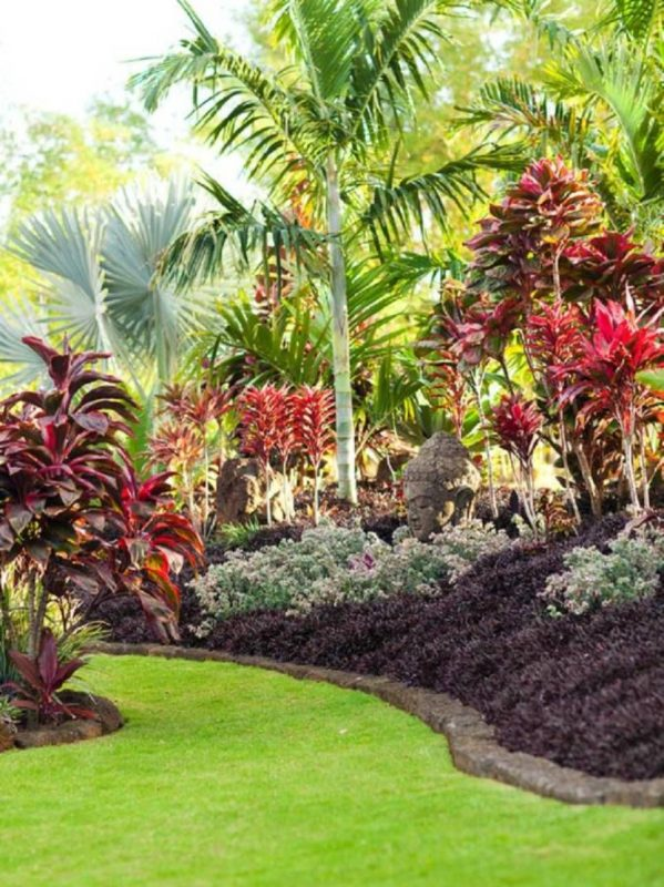 Plenty of Cordyline
