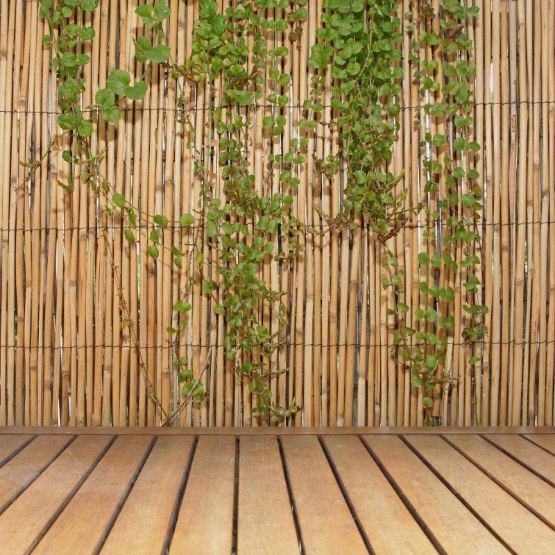 bamboo fence tree