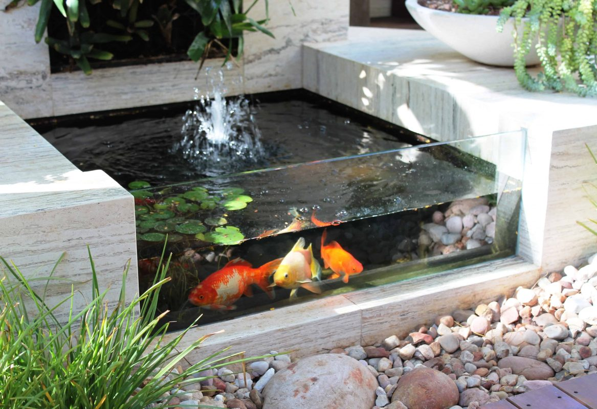 Backyard Koi Pond with Glass Wall