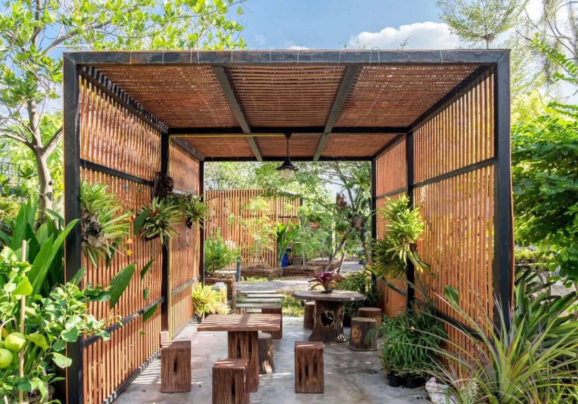 tropical plants modern for your backyard