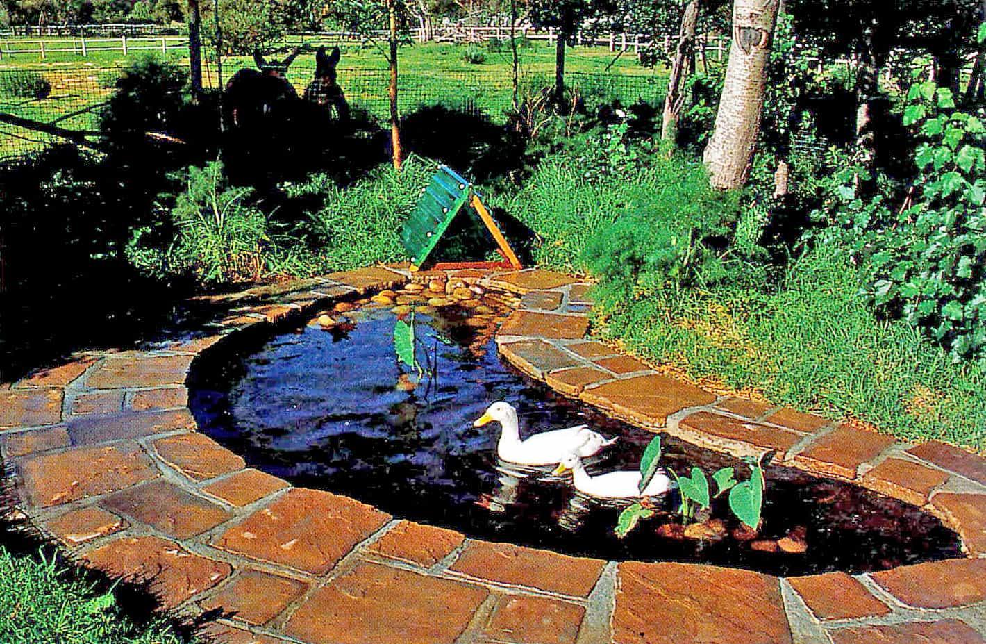 Boomerang Pond