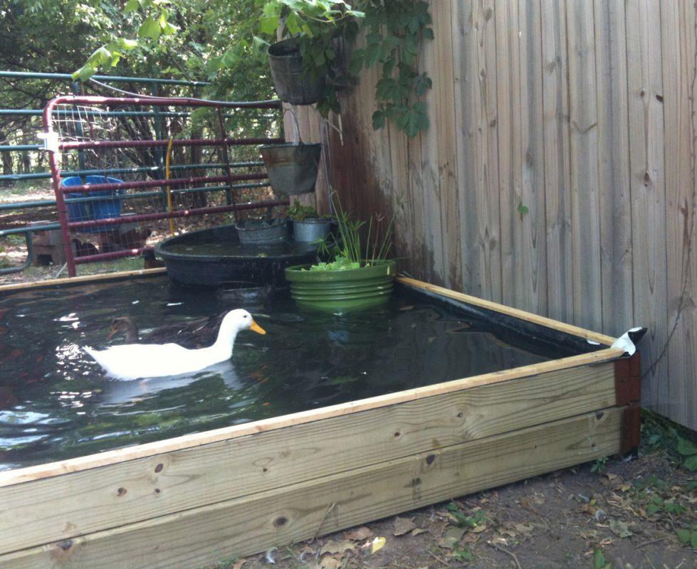 DIY No-Dig Backyard Duck Pond