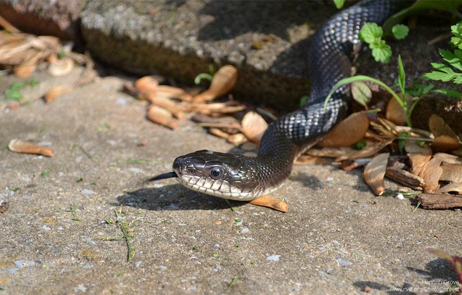 The Wild Snakes Garden