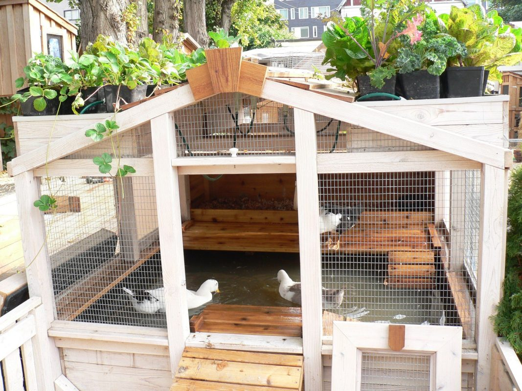21 Clever Backyard Duck Pond Ideas You can Build Yourself ...
