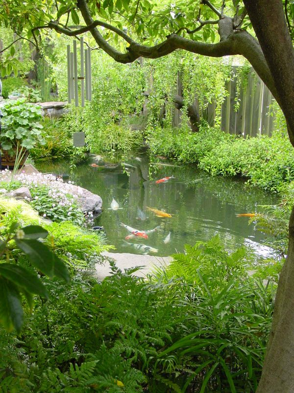 Koi Pond in Forest