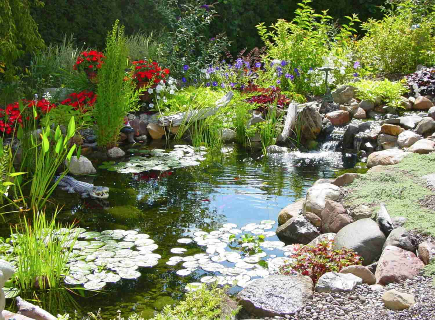 Natural Koi Pond