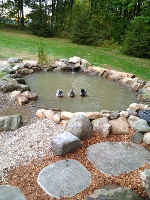 Natural Rocks Pond