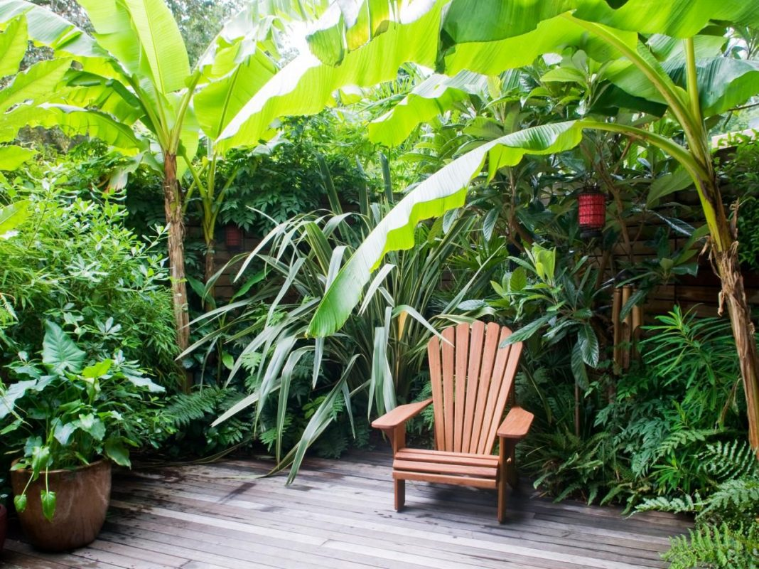 tropical backyards melbourne