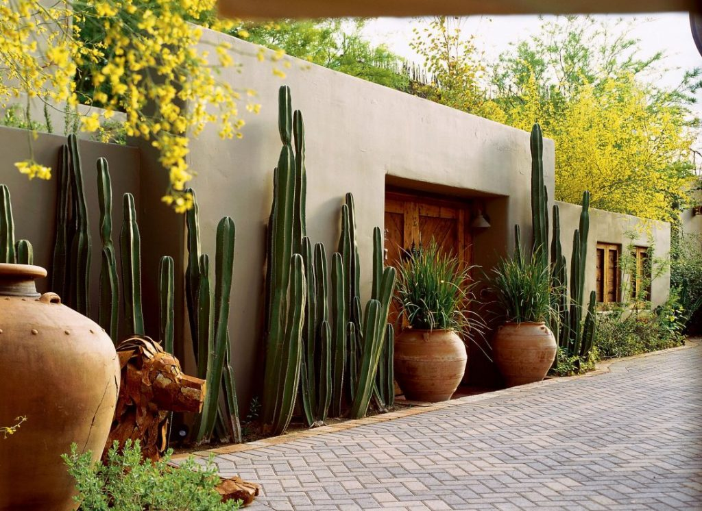 potted cactus garden southwest