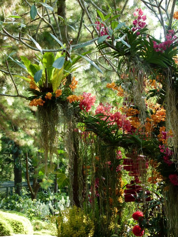 Tropical Orchid garden