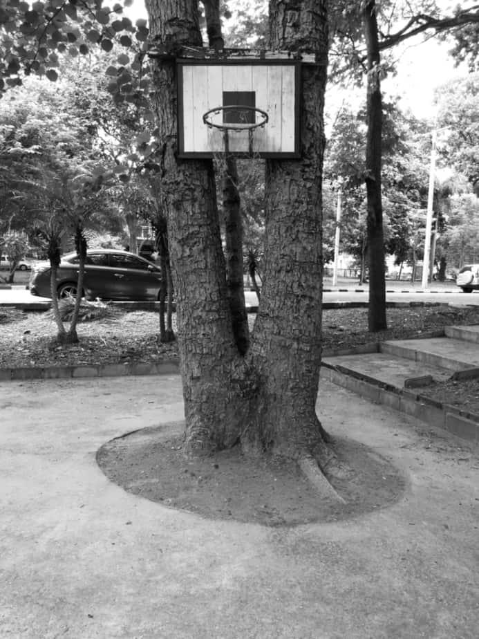 Easy Tree Hoop