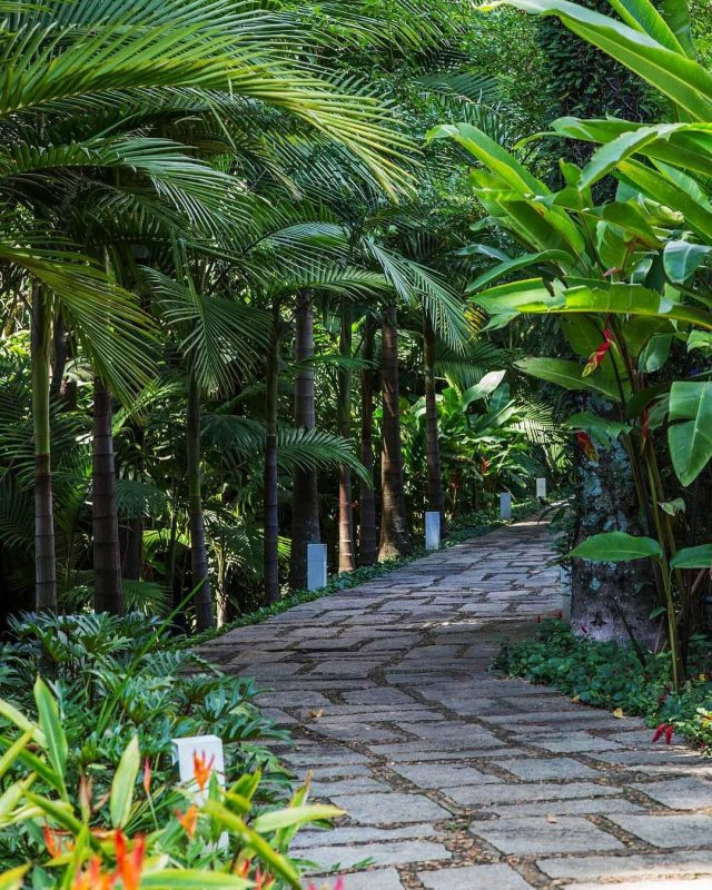 Calming Tropical Path
