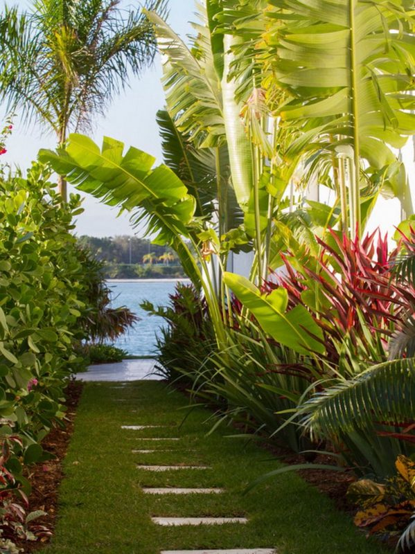Enchanting Banana Trees
