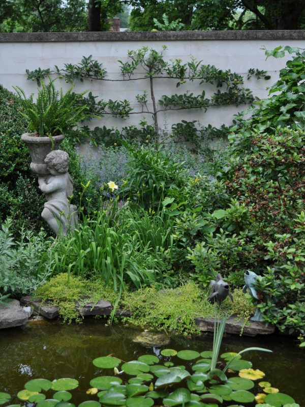 Natural Pond with Various Greeneries