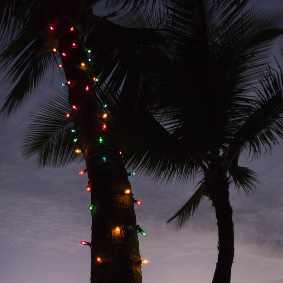 Wrapping Tree with Rope Lights