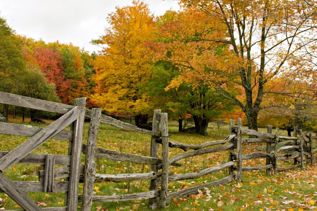 rustic horse fence idea
