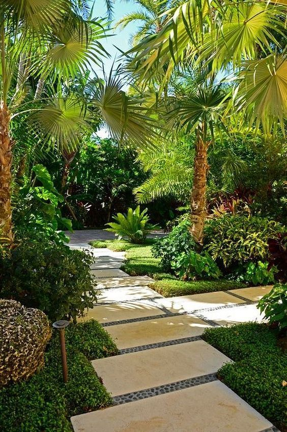 exotic palm trees pictures