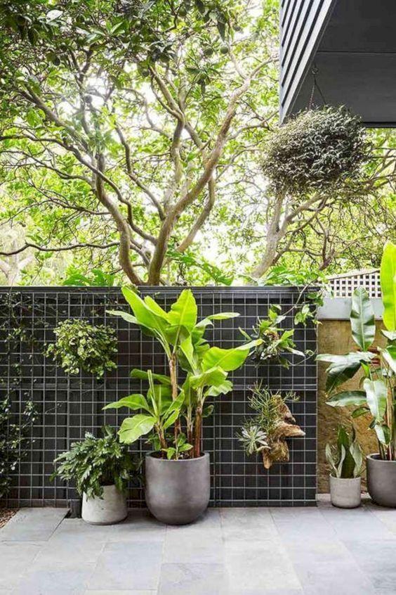 tropical vertical garden plants