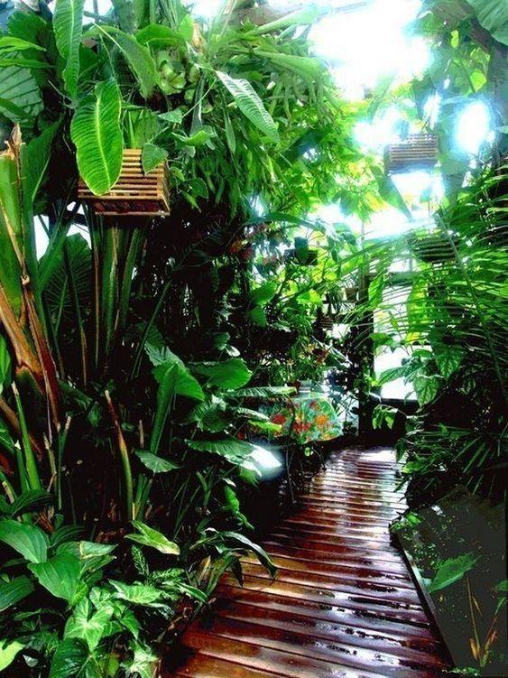 rainforest plants for home
