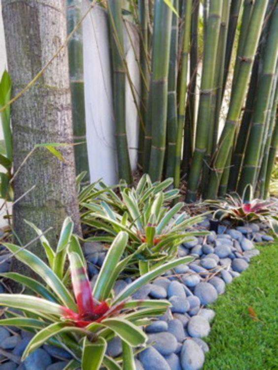 tropical backyard interest