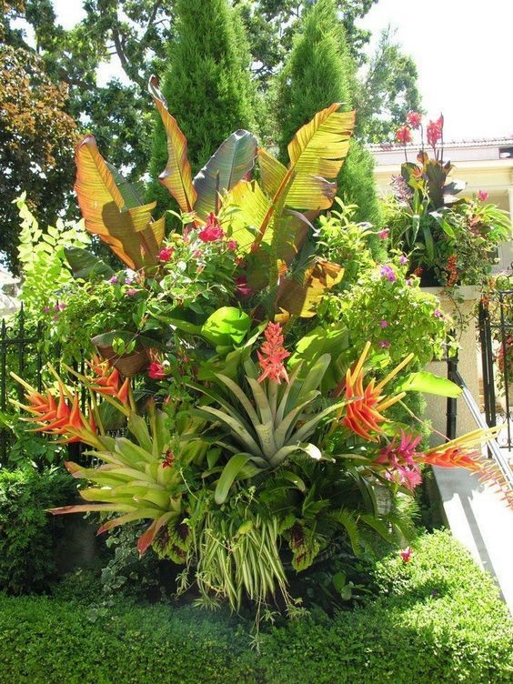 Beautiful Tropical Foliage ideas