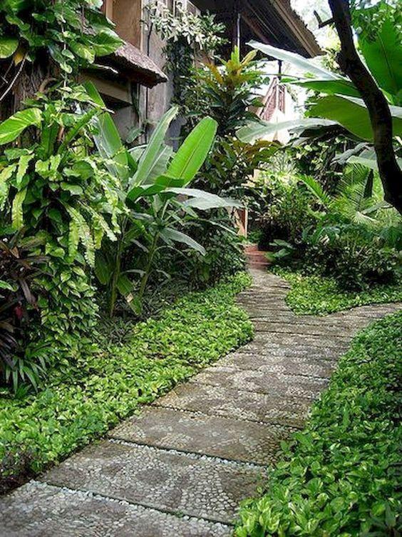 tropical rainforest plants types