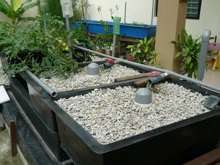 Gravels Aquaponic System