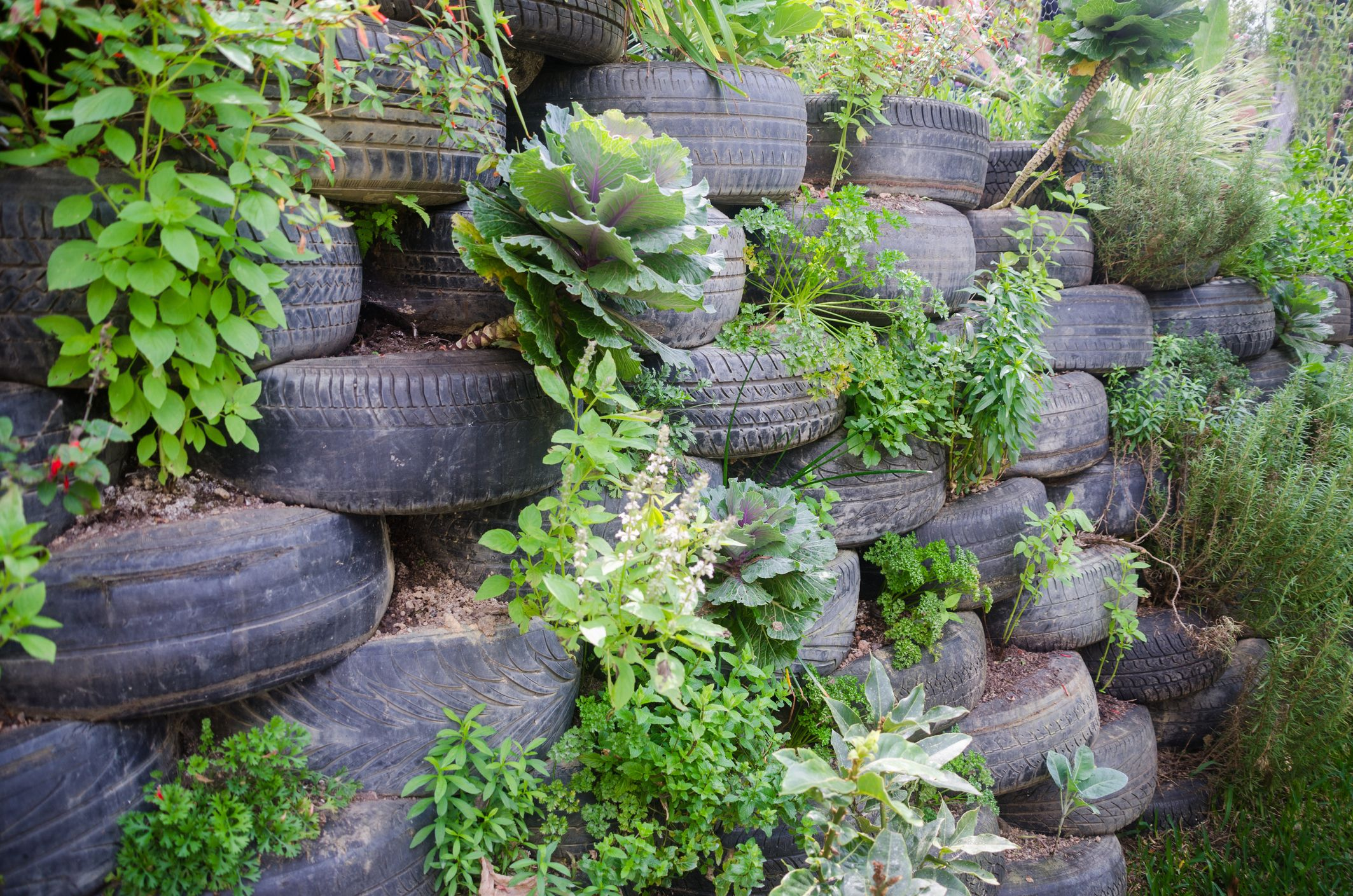 Rustic Tire Fences